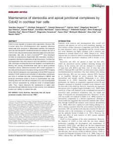 Maintenance of stereocilia and apical junctional complexes by Cdc42 ...