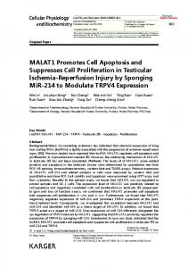 MALAT1 Promotes Cell Apoptosis and ... - Karger Publishers