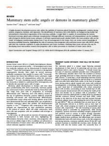 Mammary stem cells: angels or demons in