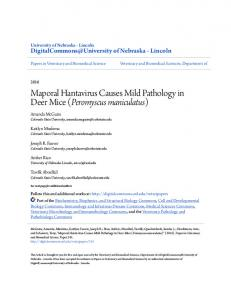 Maporal Hantavirus Causes Mild Pathology in Deer Mice (Peromyscus ...