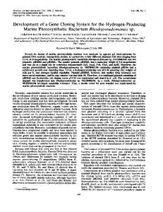 Marine Photosynthetic Bacterium Rhodopseudomonas sp. - Journal of