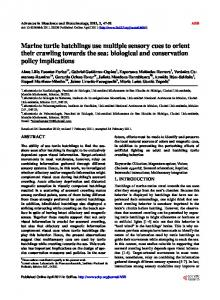 Marine turtle hatchlings use multiple sensory cues to orient their ...