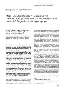 Matrix Metalloproteinase-1 Associates with Intracellular Organelles ...