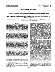 Maturation in Larch - NCBI