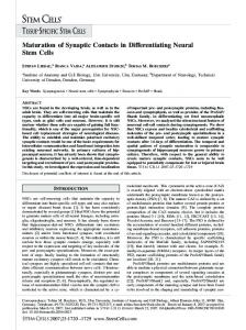 Maturation of Synaptic Contacts in ... - Wiley Online Library