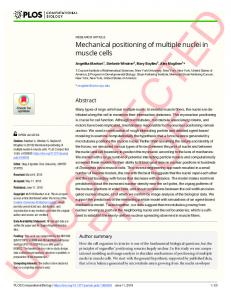 Mechanical positioning of multiple nuclei in muscle cells - PLOS