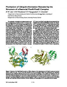 Mechanism of Ubiquitin Activation Revealed by the Structure of a ...