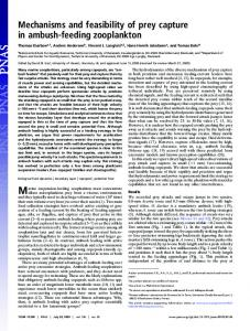 Mechanisms and feasibility of prey capture in