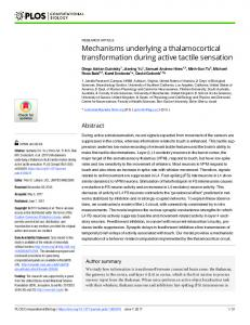 Mechanisms underlying a thalamocortical