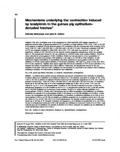 Mechanisms underlying the contraction induced by bradykinin in the ...