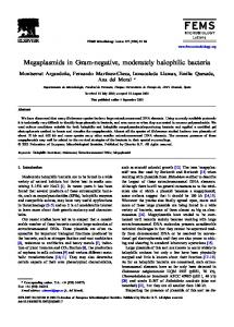 Megaplasmids in Gram-negative, moderately halophilic bacteria