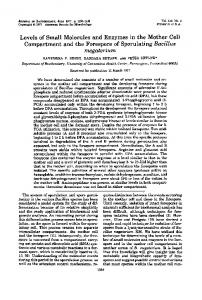megaterium - American Society for Microbiology