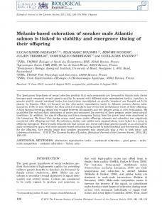 Melanin-based coloration of sneaker male Atlantic