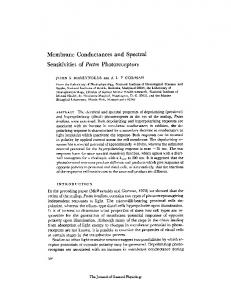 Membrane Conductances and Spectral Sensitivities ... - BioMedSearch