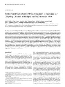Membrane Penetration by Synaptotagmin Is Required for Coupling ...