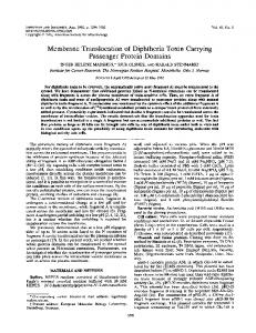 Membrane Translocation of Diphtheria Toxin Carrying Passenger ...