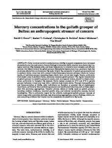 Mercury concentrations in the goliath grouper of Belize - Inter Research