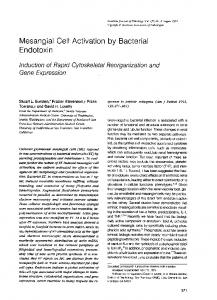 Mesangial Cell Activation by Bacterial Endotoxin - Europe PMC