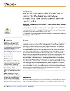 Metabolism-dependent bioaccumulation of uranium by ... - PLOS