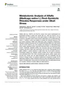 Metabolomic Analysis of Alfalfa (Medicago sativa L