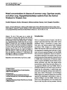 Metal concentrations in tissues of common carp, Cyprinus carpio, and ...