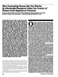 Mice Expressing Human But Not Murine -Adrenergic Receptors Under ...