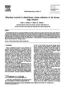 Microbes involved in dissimilatory nitrate reduction in the human large ...