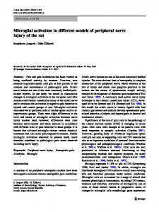 Microglial activation in different models of peripheral nerve injury of ...