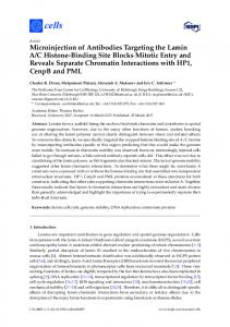 Microinjection of Antibodies Targeting the Lamin A/C Histone ... - MDPI