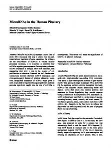 MicroRNAs in the Human Pituitary - Springer Link