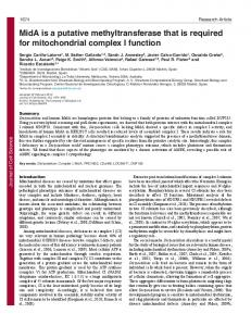 MidA is a putative methyltransferase that is required for mitochondrial ...
