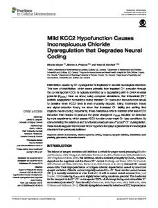 Mild KCC2 Hypofunction Causes Inconspicuous Chloride ... - Frontiers