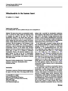Mitochondria in the human heart - Springer Link