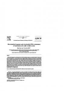 Mitochondrial biogenesis and mitochondrial DNA maintenance of