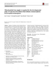 Mitochondrial iron supply is required for the developmental pulse of ...
