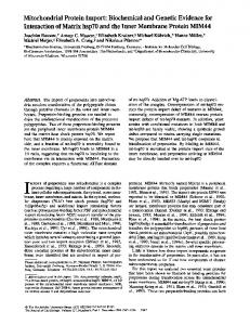 Mitochondrial Protein Import: Biochemical and Genetic Evidence for