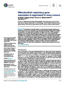 Mitochondrial respiratory gene expression is