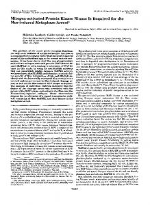Mitogen-activated Protein Kinase Kinase Is Required for the Mos ...