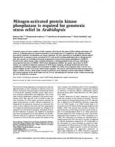 Mitogen-activated protein kinase phosphatase is required for ...