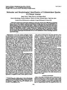 Molecular and Morphological Identification of Colletotrichum Species ...