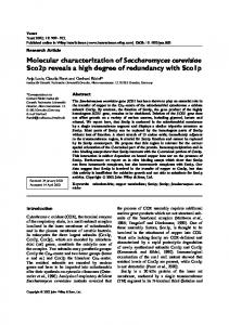 Molecular characterization of Saccharomyces ... - Wiley Online Library