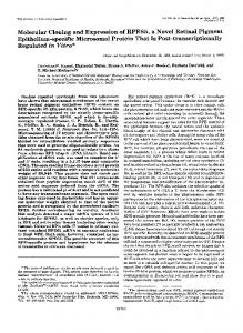Molecular Cloning and Expression of RPE65, a Novel Retinal Pigment ...