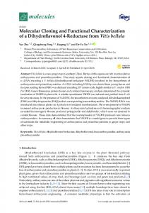 Molecular Cloning and Functional Characterization of a ...