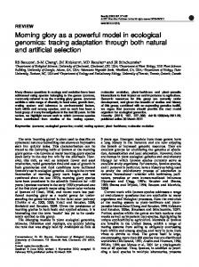 Morning glory as a powerful model in ecological ... - Duke People