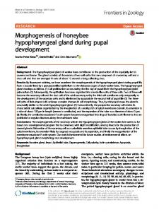 Morphogenesis of honeybee hypopharyngeal ... - Frontiers in Zoology