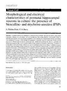 Morphological and electrical characteristics of