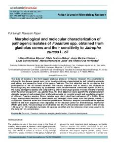 Morphological and molecular characterization of ... - Academic Journals