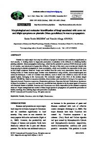 Morphological and molecular identification of fungi associated with ...