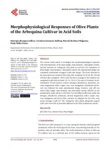 Morphophysiological Responses of Olive Plants of the