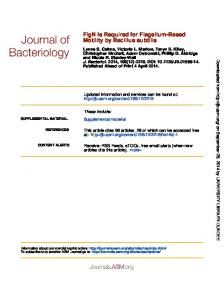 Motility by Bacillus subtilis FlgN Is Required for ...